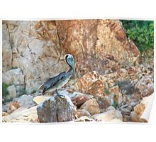 Lonely wild brown pelican HDR Poster