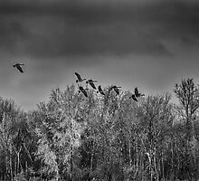 Frozen Flight by Thomas Young