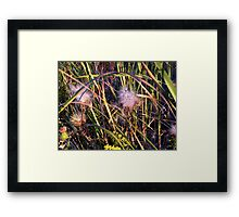 Wild Flowers 23 Framed Print