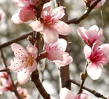 Springtime Blossom by Gabrielle  Lees