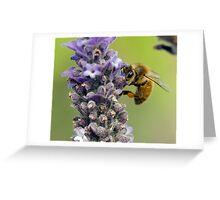 Lavender Farm Lyndoch Greeting Card