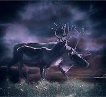 Last light on the hillside by Alan Mattison