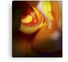 The Poetry of Roses Canvas Print