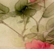 Minature Roses Sticker