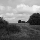 Open Prairie in B W by WildestArt