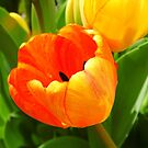 Vivid Tulips by WildestArt
