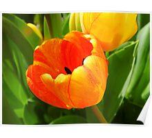 Vivid Tulips Poster