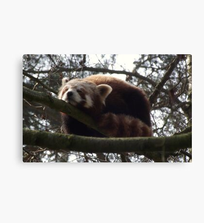 A Much Needed Nap Canvas Print