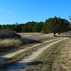 Off Road Path by davemcdaid