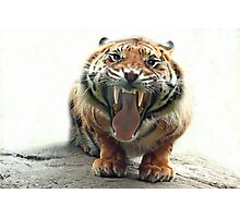 ..an angry Tiger ready to jump you...               [FEATURED] Photographic Print