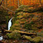 Autumn Scene by Karol Livote