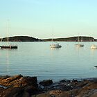 Bar Harbor boats at sunset by Celeste Cota