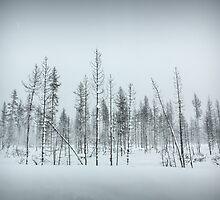 Oregon Winter Trees by JocelynVodnik