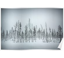 Oregon Winter Trees Poster