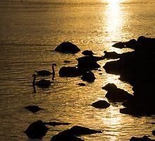 Swans on Liquid Gold by Georgia Mizuleva