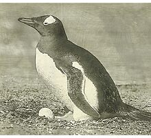 Penguin drawing Photographic Print