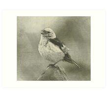 Sparrow drawing Art Print