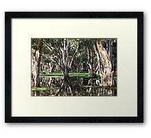 Reflecting trees Framed Print