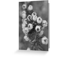 Chamelaucium mono Greeting Card