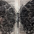 Charcoal Butterfly by Maddy Storm