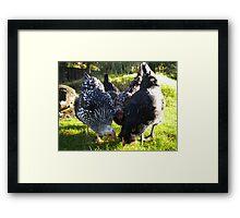 Chickens Framed Print
