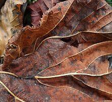 Fallen Leaf 1 by vigor