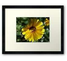 Hiding from you Framed Print