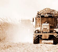 Sugar cane harvest - far north Queensland by Jenny Dean