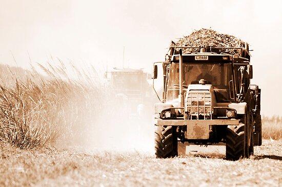 Sugar cane harvest - far north Queensland by Jenny Dean