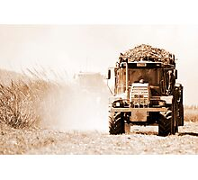 Sugar cane harvest - far north Queensland Photographic Print