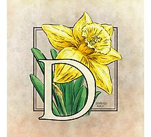 D is for Daffodil - full image Photographic Print
