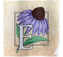 E is for Echinacea - full image Poster