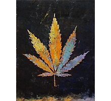 Cannabis Photographic Print