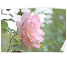 Rose IV Poster