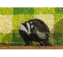 London badger Photographic Print