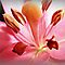 *Avatar/Macro - Enchanted flowers*