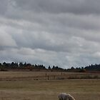ominous sky with llama. by AnjiMarth