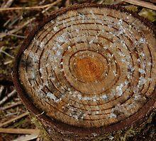 logging zone, siuslaw area blm land. by AnjiMarth