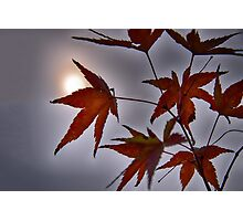 To All Things Under The Sun Photographic Print