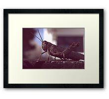 LOCUST Framed Print