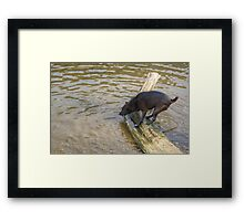 Not The Brightest Terrier On The Lake Framed Print