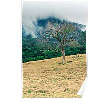 Forest tree in Queensland Poster
