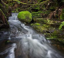 Guy Fawkes Rivulet, Tasmania #11 by Chris Cobern