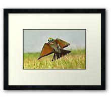 Rainbow Bee-eater  88 Framed Print