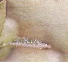 Leaves with drops of dew, textured by marina63