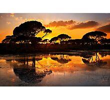 Sunset @ Strofilia forest, Prokopos lake Photographic Print