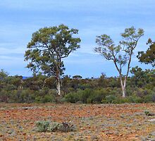 Along the way - Flinders Ranges  by imaginethis