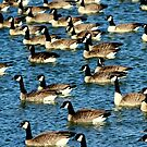 Geese  by amandameans