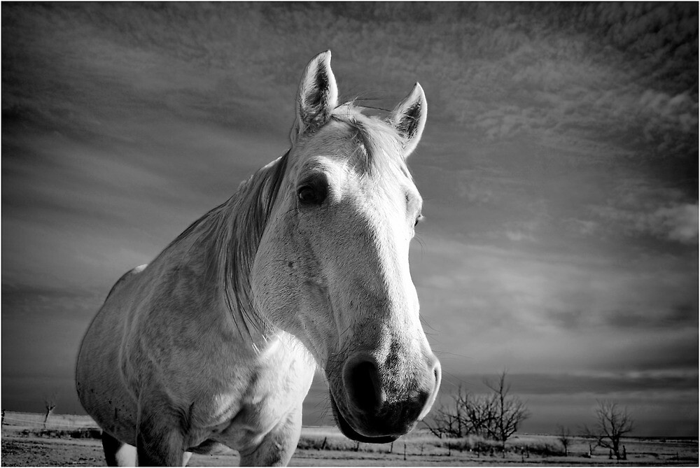 Our Mare Stormy by Suz Garten