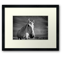 Our Mare Stormy Framed Print